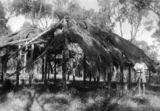 Picture of / about 'Flinders River' Queensland - Early construction of a settler's cottage at Flinders River in central Queensland, ca. 1945
