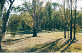 Picture relating to Cobram - titled 'Cobram Regional Park: Scotts Beach'