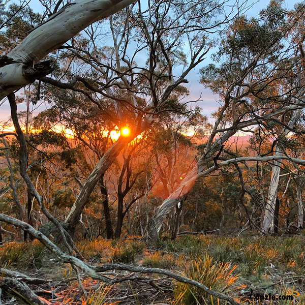 Picture of / about 'Hampton State Forest' New South Wales - Hampton State Forest