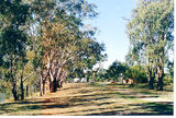 Picture relating to Elmore - titled 'Elmore: Aysons Reserve (Elmore Old Field Day Site)'