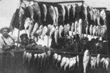 Picture of / about 'Tin Can Bay' Queensland - Two fishermen displaying their catch at Tin Can Bay, ca. 1925