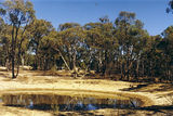 Picture relating to Muckleford - titled 'Muckleford State Forest; Red White & Blue Mine camp ground'