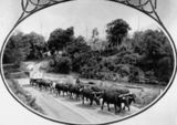 Picture relating to Canungra - titled 'Bullock drays crossing the Canungra Creek at the Canungra Crossing'
