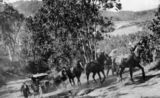 Picture of / about 'Julatten' Queensland - Horse team assists car over Slatey Pinch on Queensland's Bump Road, ca. 1930