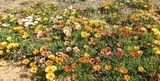 Picture relating to Norseman - titled 'Norseman'