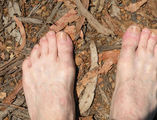 Picture relating to Manjimup - titled 'Manjimup - Bare feet on leaf litter'