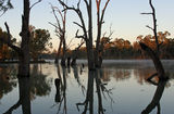 Picture of / about 'Murray River' New South Wales, Victoria and South Australia - Murray River