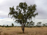 Picture relating to Boulia - titled 'Boulia'