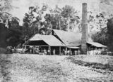 Picture of / about 'Buderim' Queensland - Mill workers outside a sugar mill near Buderim, ca.1892