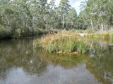 Picture relating to Shoalhaven River - titled 'Shoalhaven River'