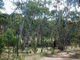 Picture of / about 'Para Wirra Recreation Park' South Australia - Para Wirra Recreation Park