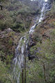 Picture of / about 'Mathinna Falls Forest Reserve' Tasmania - Mathinna Falls Forest Reserve
