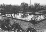 Picture relating to Red Hill - titled 'Water feature in grounds of the 'Dial House'. Moresby Street, Red Hill.'