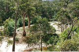 Picture relating to Aberfeldy River - titled 'Aberfeldy River - Wallhalla Rd Bridge Camp site'