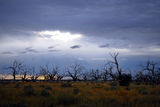 Picture relating to Menindee - titled 'Menindee'