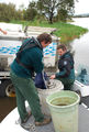 Green Hill Lake Fisheries Officers releasing trout at Green Hill Lake Ararat