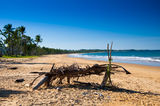 Picture of / about 'Wongaling Beach' Queensland - Wongaling Beach Queensland