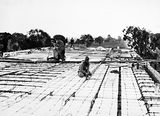 Picture relating to Black Mountain - titled 'Workmen preparing roof for pouring concrete CSIR Laboratory Building, Clunies Ross Street, Black Mountain, under construction.'
