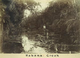Picture relating to Mackay - titled 'Habana Creek, outside Mackay, ca. 1880'
