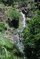 Picture of / about 'Kondalilla Falls' Queensland - Kondalilla Falls