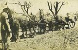 Picture relating to Rocky Glen - titled 'Setting up the Wheat Hauling Team at Rocky Glen  1925'