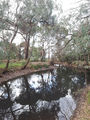 Picture relating to Bendigo Creek - titled 'Bendigo Creek'