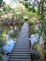 Picture of / about 'Edith River' the Northern Territory - Edith River Footbridge