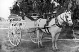 Picture relating to Charleville - titled 'Horse and wagon belonging to H. S. Britcher, a butcher in Charleville, ca. 1932'