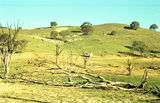 Picture relating to Woolgarlo Mine - titled 'Woolgarlo Mine'