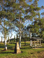 Picture relating to Boonah - titled 'Boonah - Cossart memorial trees'
