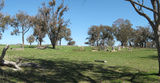 Picture relating to Weetangera - titled 'Weetangera Methodist Cemetery and former Methodist church site'