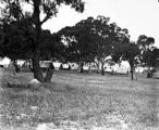 Picture relating to Deakin - titled 'Camp at Red Hill, now Latrobe Park, Deakin.'