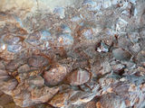 Picture of / about 'Woolshed Creek Geological Monument' the Australian Capital Territory - Fossils embedded in mudstone