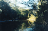 Picture relating to Ellenborough River - titled 'Looking up river from where the old bridge used to be.'