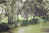 Picture relating to Campaspe River - titled 'Campaspe River: Barnadown reserve'