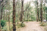 Picture relating to Bunyip State Park - titled 'Bunyip State Park: Mile Point bush camp area'