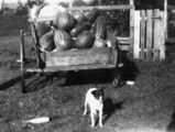 Picture relating to Beaudesert - titled 'Load of watermelons at Beaudesert, ca. 1937'