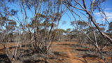 Picture of / about 'Mungo National Park' New South Wales - Mallee
