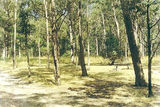 Picture relating to State Forest - titled 'Wron Wron State Forest; The Gums picnic ground'