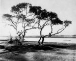 Picture relating to Shorncliffe - titled 'Oyster shed at Cabbage Tree Creek, Shorncliffe, Brisbane, 1900-1910'