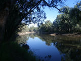 Picture relating to Murray River - titled 'Police Paddock reserve.'