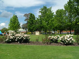 Picture relating to Cowra - titled 'Cowra Rose Garden'