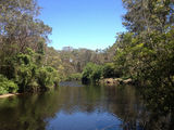 Picture relating to Lane Cove National Park - titled 'Lane Cove National Park'