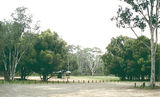 Picture relating to Heathcote-Graytown National Park - titled 'Heathcote-Graytown National Park: Dargile Plantation'
