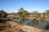 Picture relating to Darling River - titled 'Darling River'