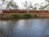 Picture of / about 'Cattle Pool' Western Australia - Cattle Pool
