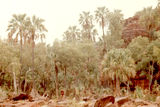 Picture relating to Palm Valley - titled 'Palm Valley & Livistona Mariae Palms'