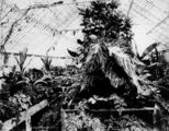 Picture relating to Bowen Hills - titled 'Fern-filled Conservatory at Bowen Park, Brisbane, ca. 1890'