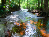 Picture relating to Laradeenya Creek - titled 'Laradeenya Creek'