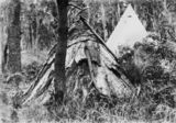 Picture relating to Bribie Island - titled 'Camp on Bribie Island, 1894'